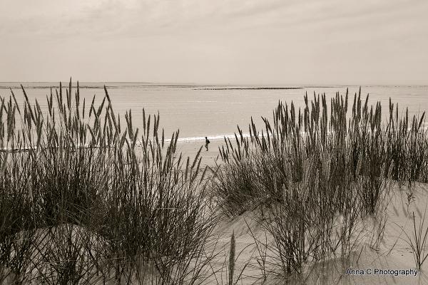 Douceur de dune # 2
