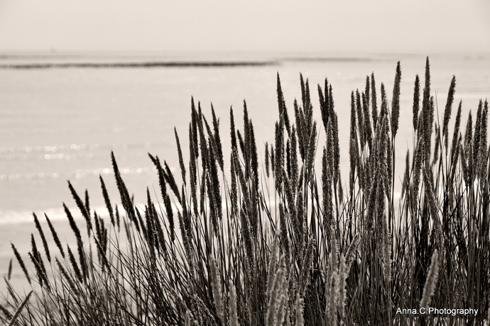 Douceur de dune # 4