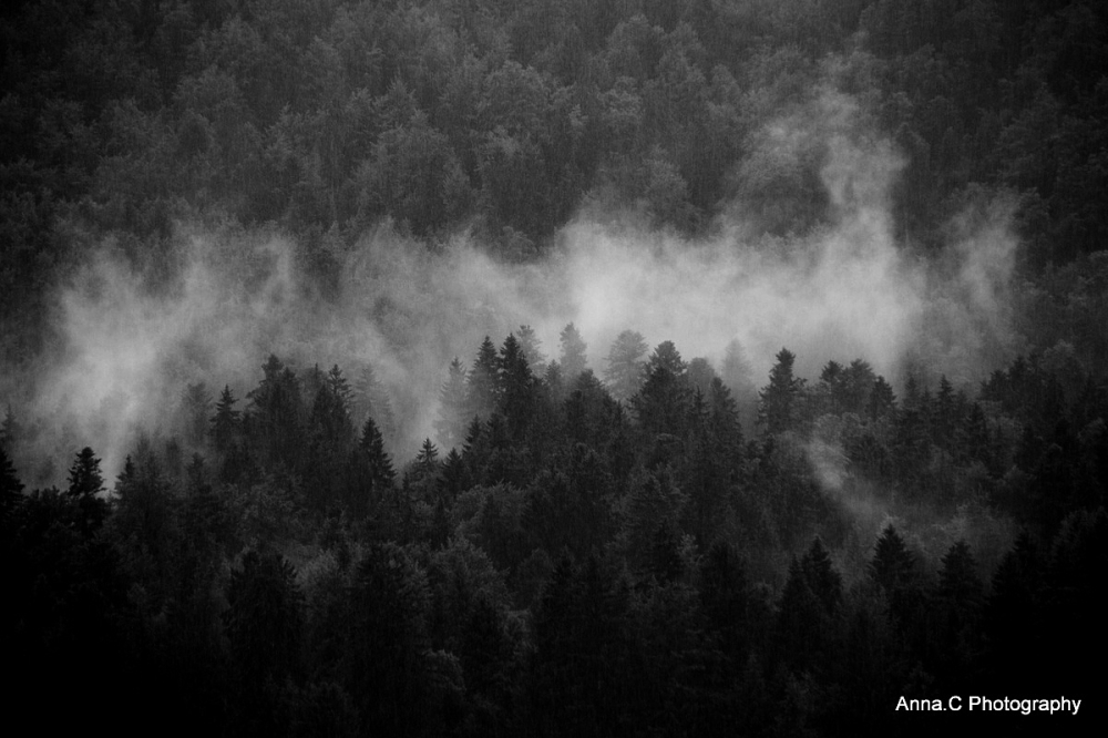 Fog and rain on the forest