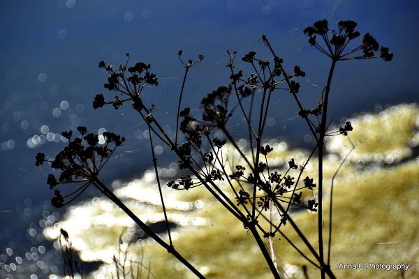 Lilleau des Niges  en automne # 3