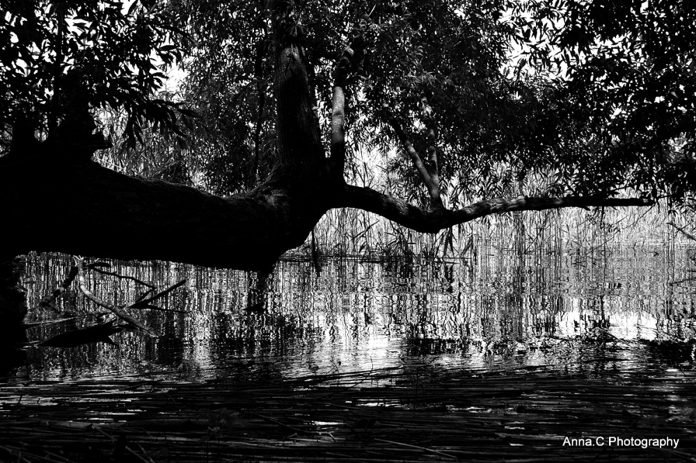 Les secrets du lac # 1