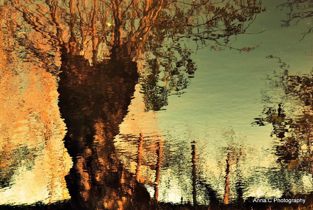 couleurs d'automne dans le marais