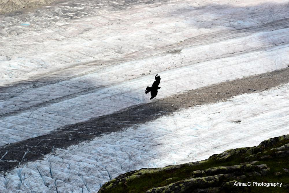 Vol au-dessus du glacier