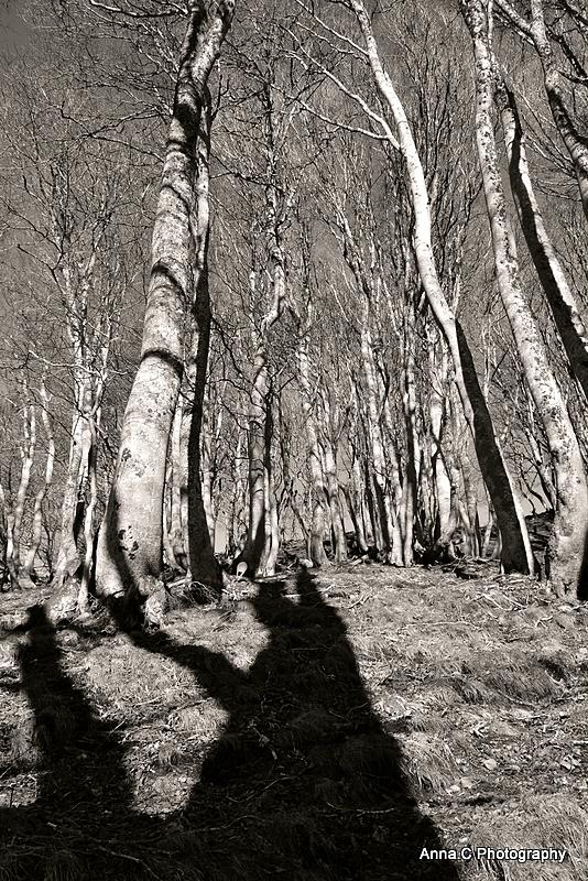 L'ombre du géant de la forêt