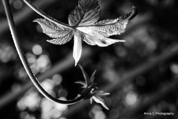 Jeunes pousses de printemps # 3