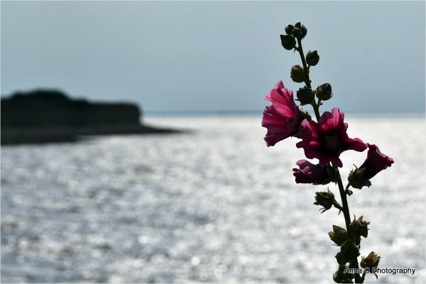 Fleur d'océan