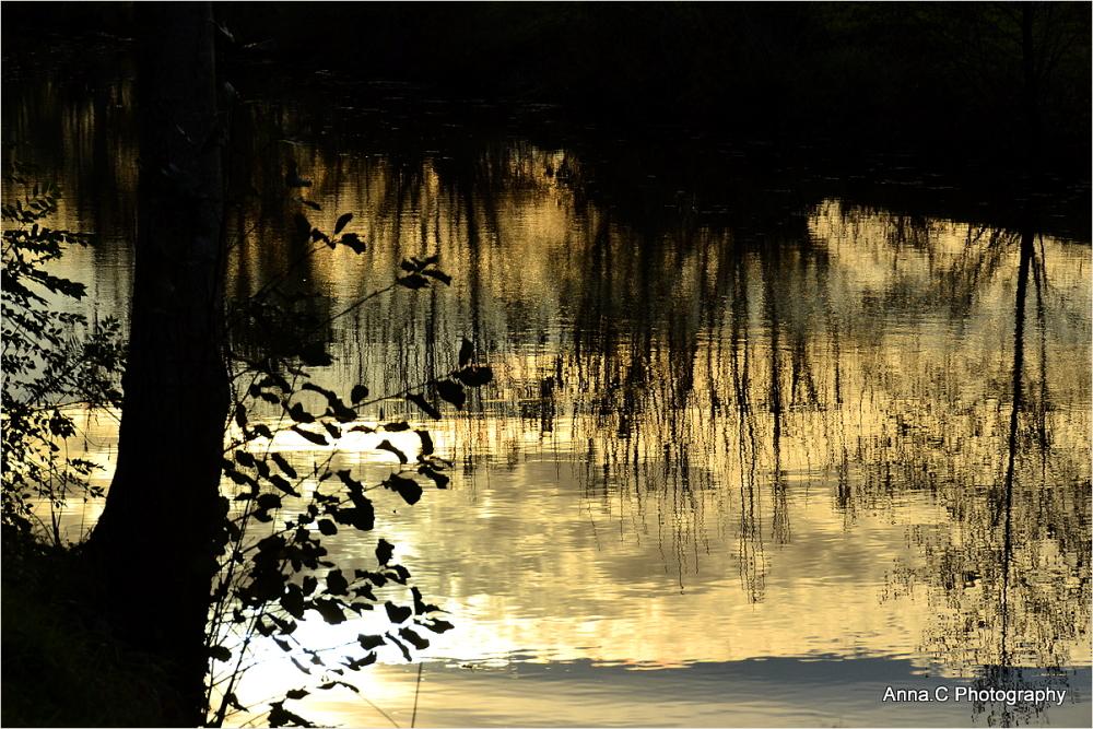 Les secrets du marais # 2