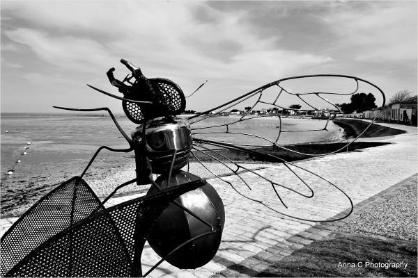 L'invasion des insectes
