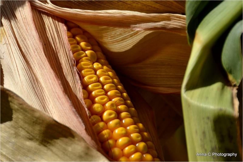 L'or en grains