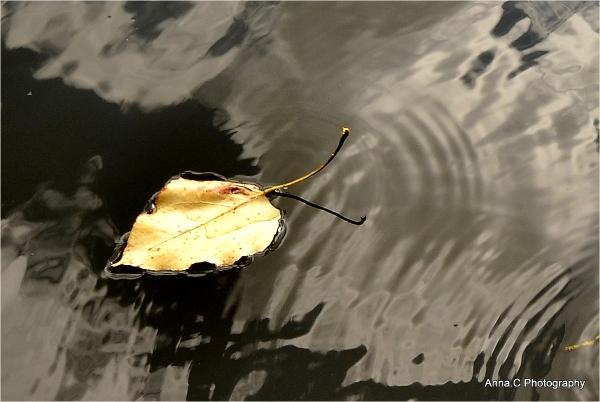 Au fil de l'automne