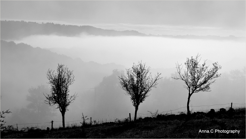 Three little trees in the mist