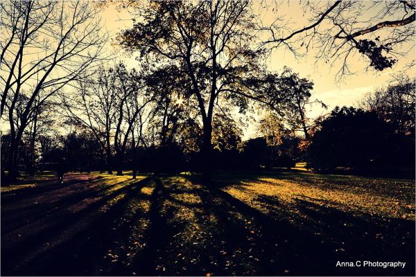 Dernières lumières d'automne