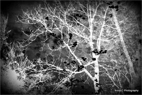 Radiographie d'un arbre en hiver