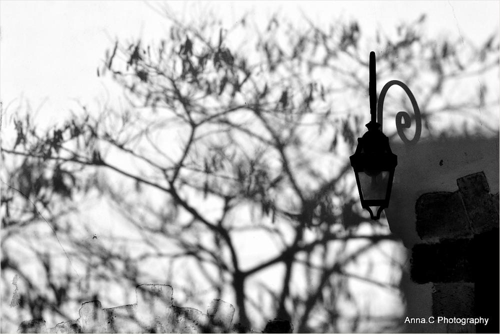 L'arbre à la lanterne