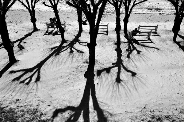 Les arbres de la plage