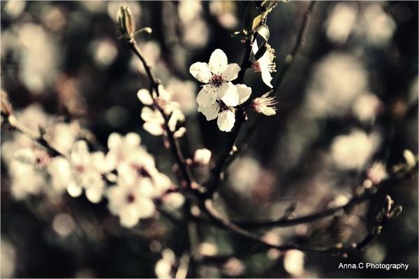 Spring softness