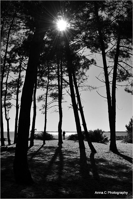 A l'ombre des grands pins