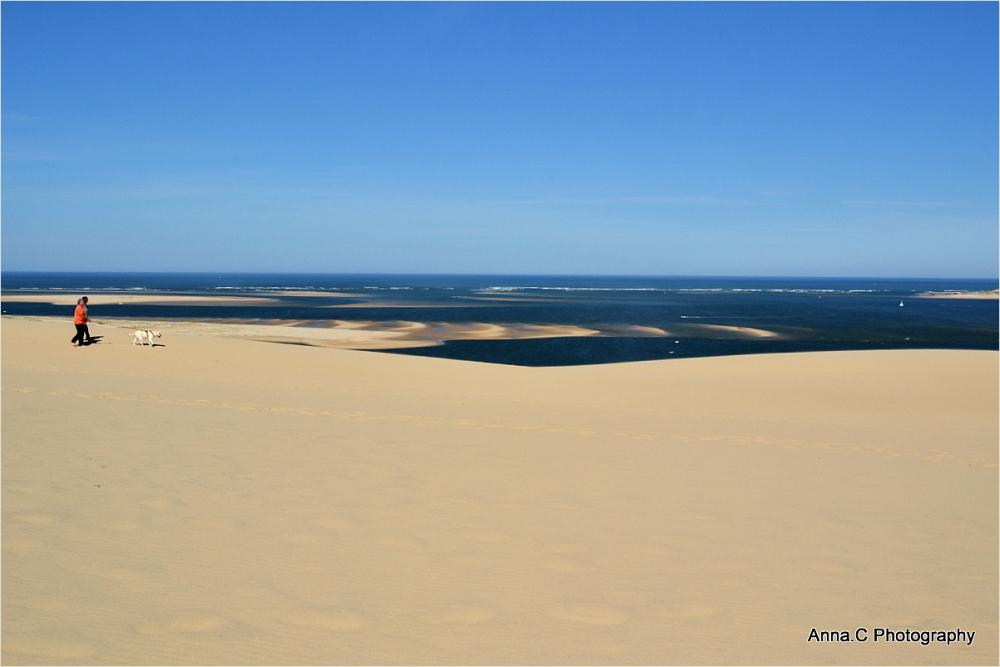 Le chien sur la dune