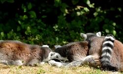 Petite sieste en famille