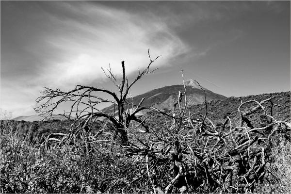 Pico del Teide # 2