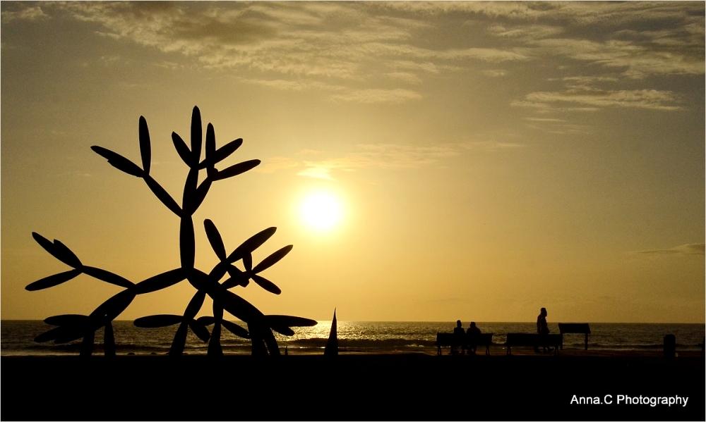 Le cactus de fer