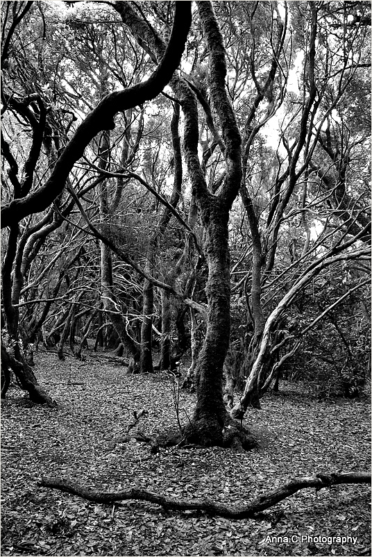 Dans la forêt primaire #1