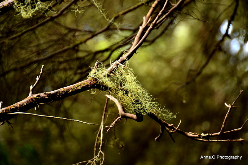 Dans la forêt primaire #2