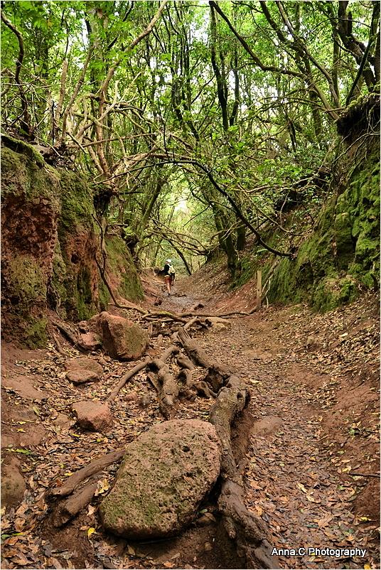 Dans la forêt primaire #5