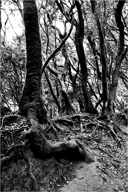 Dans la forêt primaire #7