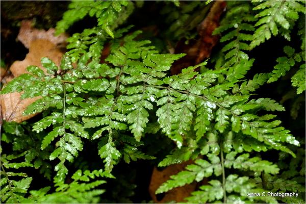Dans la forêt primaire #8
