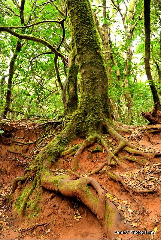 Dans la forêt primaire #9 - Fin