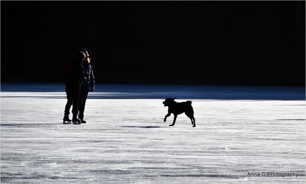 Le chien patineur