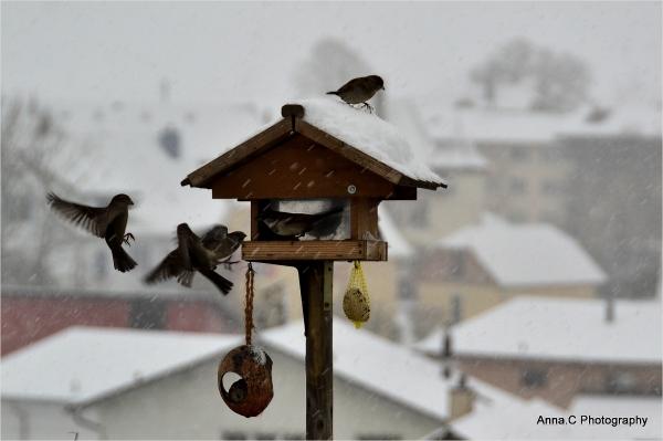 Le déjeuner des oiseaux sous la neige