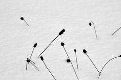 Calligraphie sur la neige