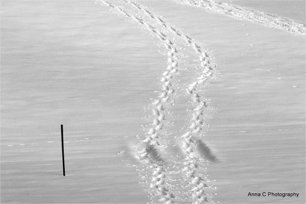 Suivre les traces