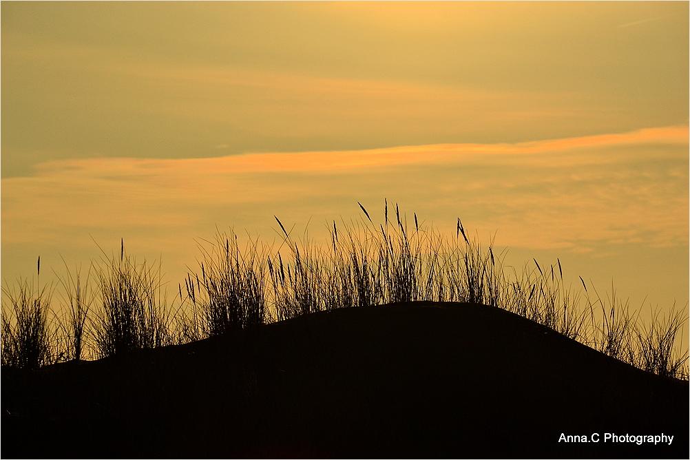 Caresse du soleil couchant sur les oyats