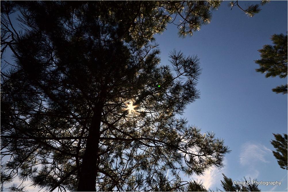 Sieste sous les pins