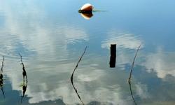 calligraphie sur l'eau