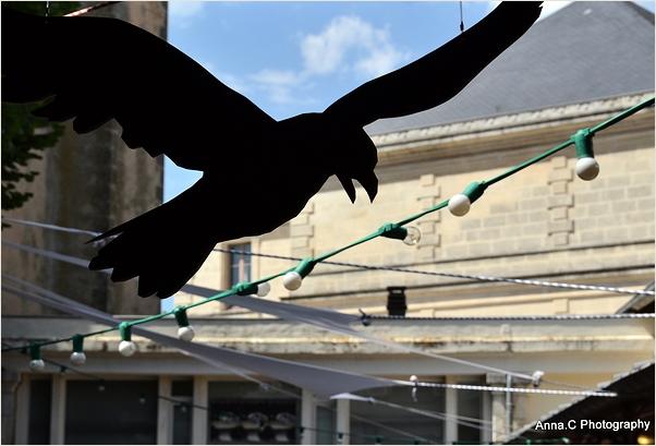 L'attaque du corbeau