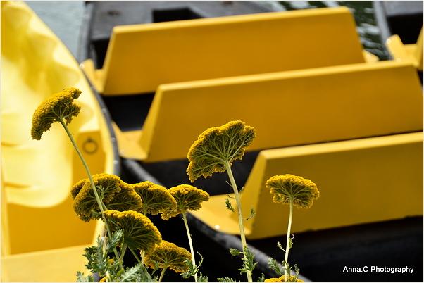 Sous le signe du jaune