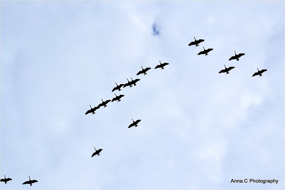 Migration vers des cieux plus bleus
