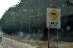 Beware of mooses