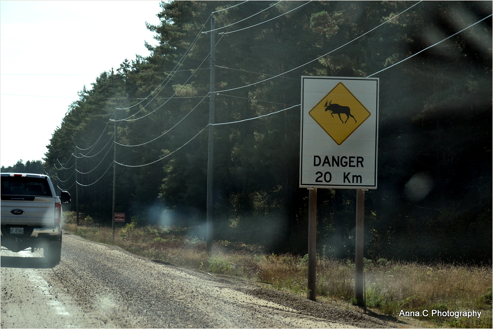 Beware of mooses