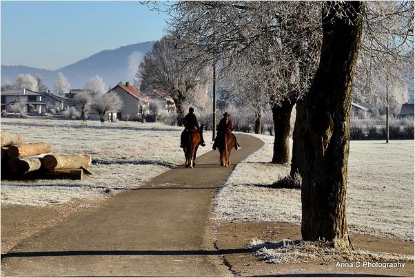 Balade hivernale à cheval
