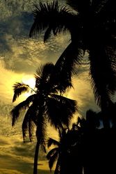 Sunset in the palms trees #2