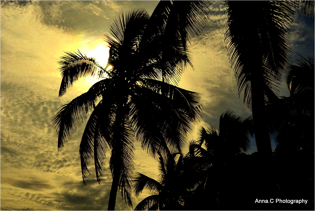 Sunset in the palms trees