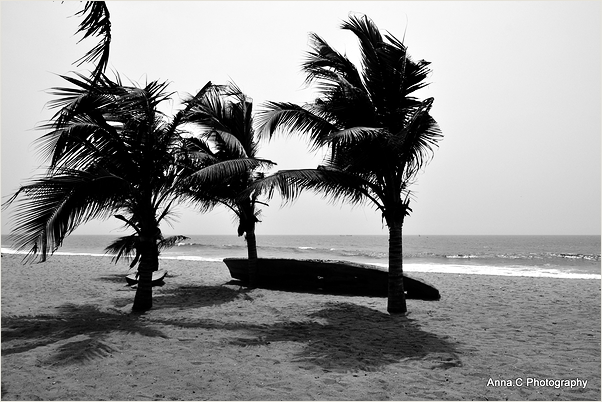 Three palms trees in the wind