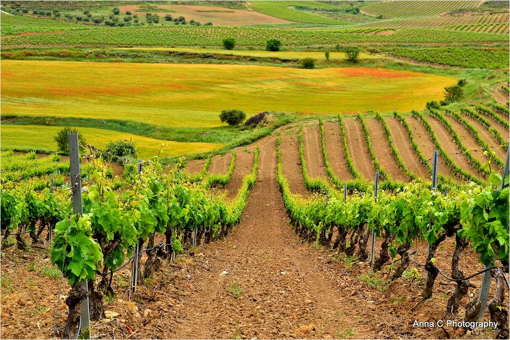 Paysage de la Rioja