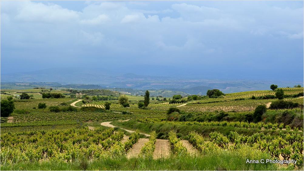 La route dans les vignes