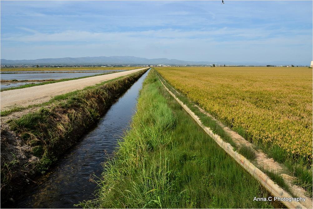 Les rizières du Delta de l